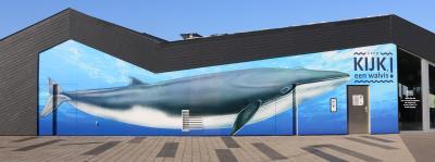 Exposition d'été « Kijk, een walvis (Regarde, une baleine) » © IRSNB/K. Moreau