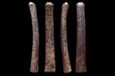 Photo of the four sides of the Ishango bone