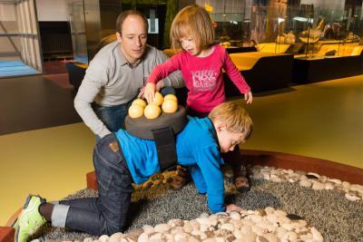 Activité où les enfants peuvent se mettre dans la peau d'un papa crapaud accoucheur : pas si simple de se déplacer avec des œufs sur le dos !