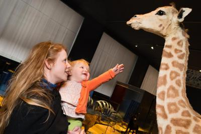 Activity during which children can discover that standing up is more dangerous for some species than for others.