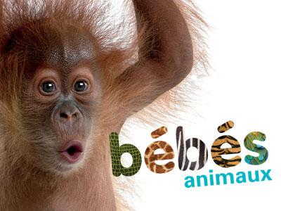 Visual of 'Baby Animals' (a baby monkey)