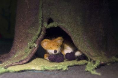 Een gewolvilte vos in een van de animatiefilmpjes ontwikkeld door ons eigen multimediateam