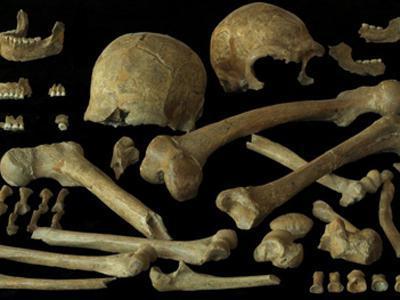 Menschliche Reste aus der Grotte von Spy (Belgien)