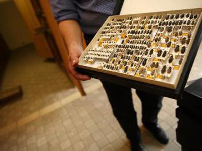 Un des scientifiques montre des insectes dans les collections.