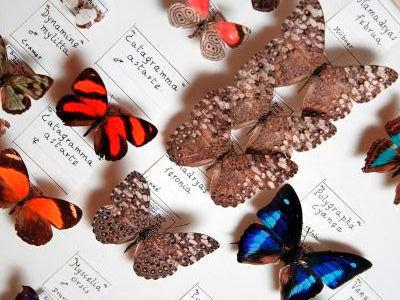 Butterflies and moths (Lepidoptera) in the entomology collection