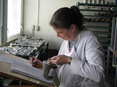Marleen De Ceukelaire, conservatrice des collections geologiques, décrit le contenu de carottes sédimentaires.