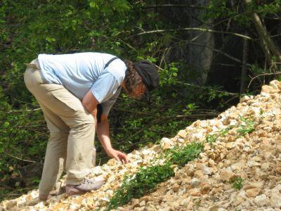 Curator Marleen De Ceukelaire collecting field samples