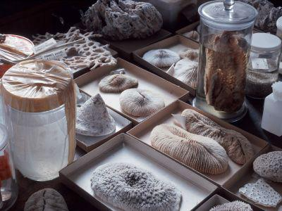 View of some specimens in the invertebrate collection