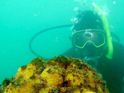 Diver examining a sponge