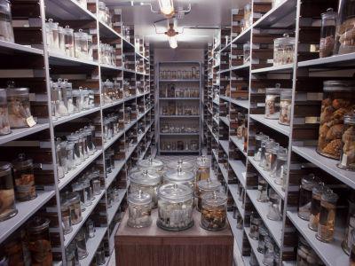 Blik op een bewaarzaal voor de natte collecties met invertebraten