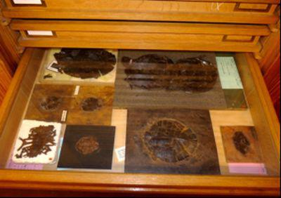 Turtles from the Messel Pit collection