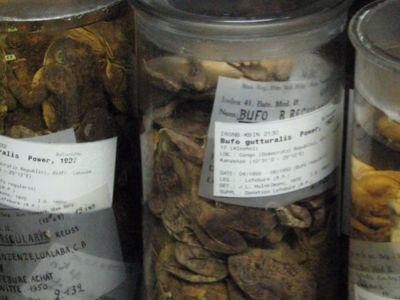 Frogs in the vertebrate collection