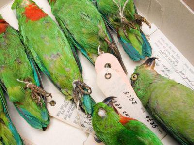 Vögel in der Wirbeltieren-Sammlung