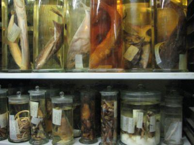 Fish species in the wet collection.
