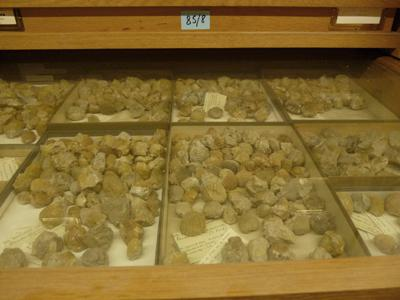 Invertebrates from the De Coninck collection