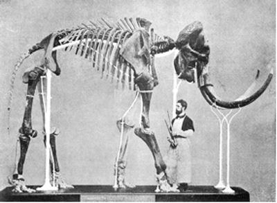 Mammoth of Lier, found in 1860, mounted by Louis De Pauw