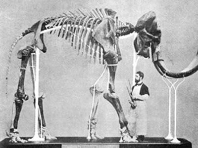 Mammoet van Lier, gevonden in 1860, en opgesteld door Louis De Pauw