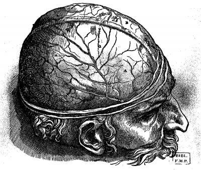 Gravure d'un cerveau