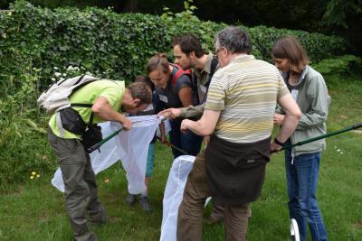 Des participants au BioBlitz inspectent leur prise dans les filets à insectes (photo : IRSNB)