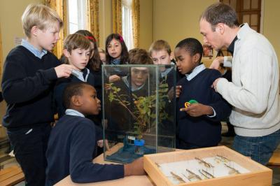 Bioloog Jérôme Constant (KBIN) geeft uitleg over wandelende takken in een school (Foto: Thierry Hubin, KBIN)