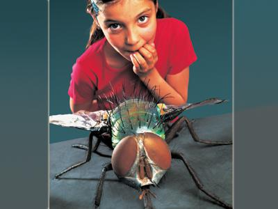 Visual of the exhibition 'CreepyCrawly': a girl next to a giant fly