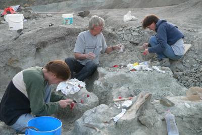 Bens fossile Knochen wurden 2007 aus dem Ton- und Mergelbruch von Frick (Schweiz) ausgegraben. (Foto: Ben Pabst)