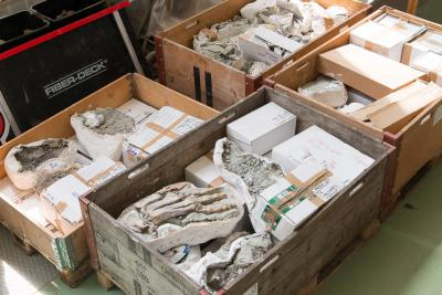 Vier houten kisten, samen een halve ton zwaar, worden binnengereden in het paleontologielab van het Museum voor Natuurwetenschappen in mei 2016: Ben is in Brussel! (foto: Thierry Hubin / KBIN)