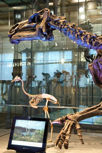 Zicht op de dinosauriërgalerij, met op de voorgrond een infoscherm over iguanodons