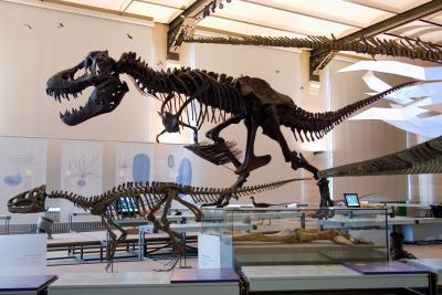De Tyrannosaurus rex in de Galerij van de Dinosauriërs