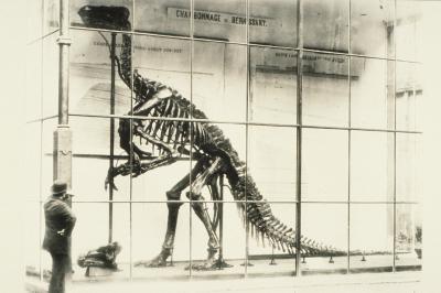 Het allereerste opgestelde exemplaar van een 'Iguanodon bernissartensis', op de binnenplaats van het Hof van Nassau