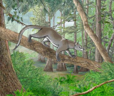 Reconstruction of Dormaalcyon latouri(Dormaal, Belgium; Eocene). Image credit: Charlène Letenneur, MNHN / Pascale Golinvaux, RBINS.