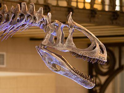 Skedel van Cryolophosaurus in de Galerij van de Dinosauriërs
