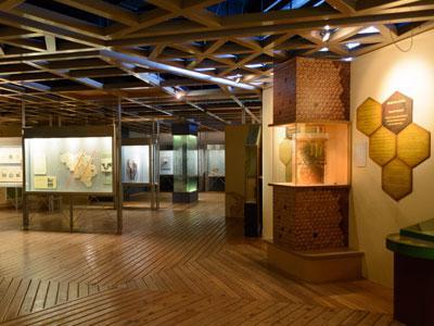 Salle des Insectes