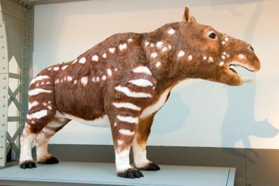 Corticochaeris gouldi, the imagined descendent of the capybara