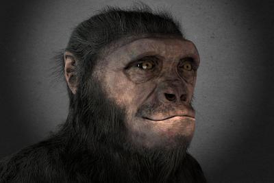 Virtuele reconstructie van de hoofd van Toumai, de Sahelanthropus tchadensis die 7,2 tot 6,8 miljoen jaar geleden leefde.  (beeld: Claude Desmedt - KBIN)