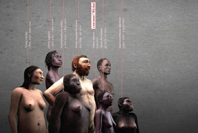Le visuel représentant 7 hominidés depuis Australopithecus afarensis à Homo sapiens