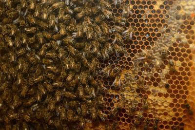 Ein Lehr-Bienenstock