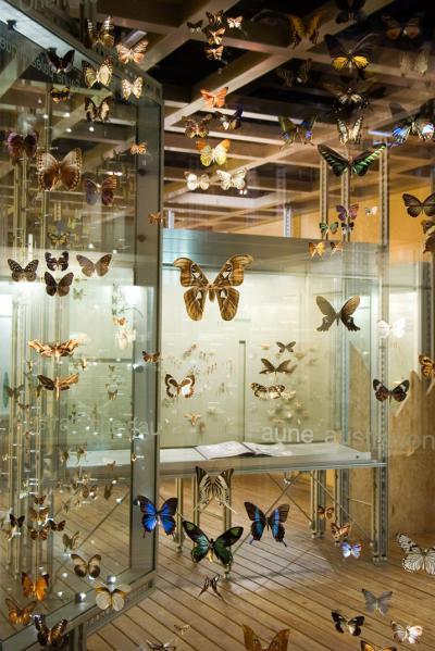 Alle kanten van de vlinders zijn zichtbaar in het vlinderraam