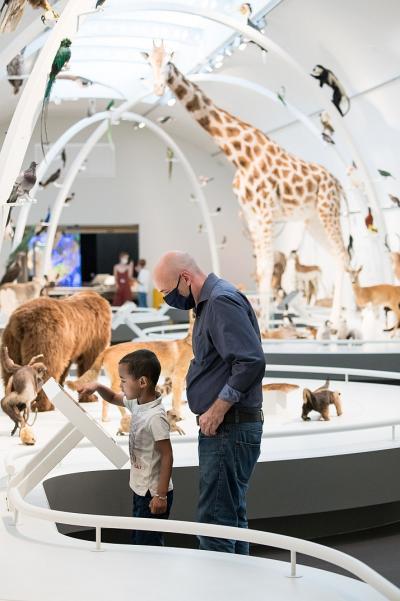 Des visiteurs découvrent les nombreux animaux naturalisés exposés dans la salle Planète Vivante (photo : Thierry Hubin  / IRSNB)