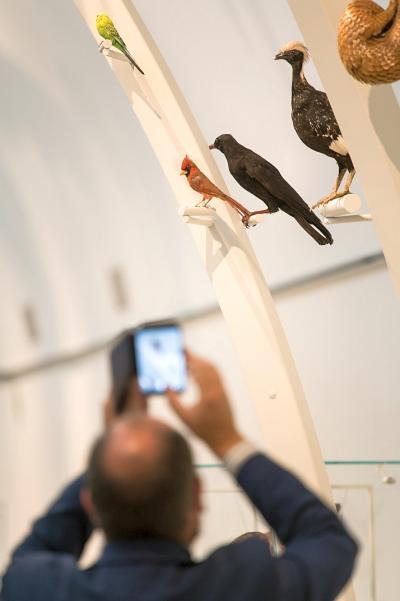 Un visiteur prend en photo des oiseaux exposés dans la première partie de Planète Vivante (photo: Thierry Hubin / IRSNB)
