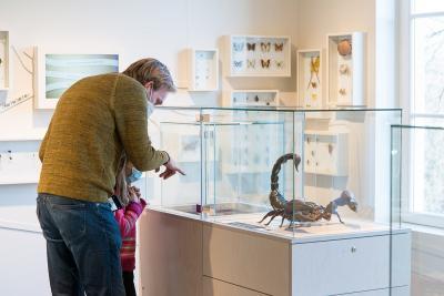 Dans l'Arthropodium, se côtoyent maquettes géantes, vivariums et spécimens naturalisés (photo : Thierry Hubin, IRSNB)