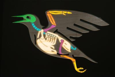 Een schematisch skelet verschijnt, tegen de achtergrond verlicht, in het silhouet van een vogel (foto: Thierry Hubin, KBIN)