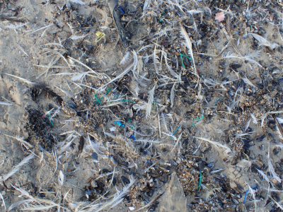 For litter on the beaches, the situation remains problematic. © RBINS/MUMM
