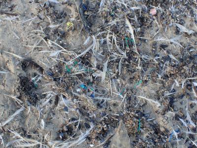 En ce qui concerne les déchets sauvages, la situation sur les plages reste problématique. © IRSNB/UGMM