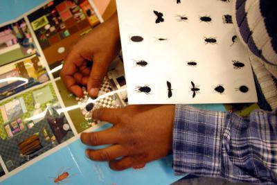 Enfant en train de compléter son document en remettant différents insectes à leur place