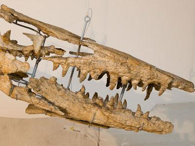 Mosasaurs_low