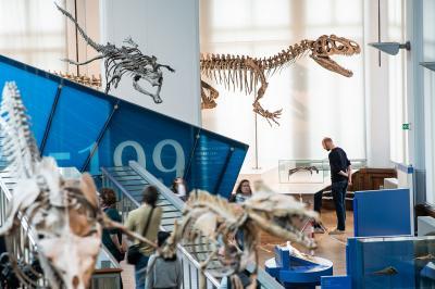 Arkhane staatin de Galerij van de Evolutie, in het deel over het juratijdperk (foto: Thierry Hubin / KBIN)