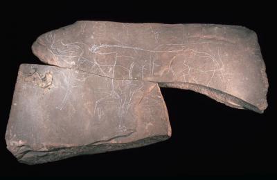 Tegel van Chaleux, een pronkstuk uit het Museum voor Natuurwetenschappen