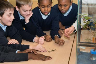 Pupils looking at the stick insects in their classroom