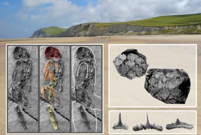 © Krien Hansen (arrière-plan : les falaises du Cap Blanc-Nez), Dirk Hovestadt & Frederik Mollen (le squelette, les denticules et quelques dents)
